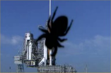 spider-vs-space-shuttle.jpg